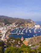 Recorriendo California: Isla Santa Catalina